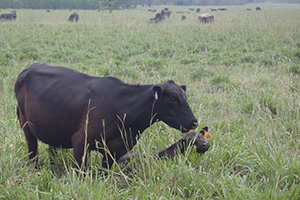 The ranch is an Angus cow-calf operation that utilizes conservative stocking rates and a flexible rotational grazing system.