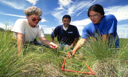 Photo of three individuals with NRCS working in the field with grasses