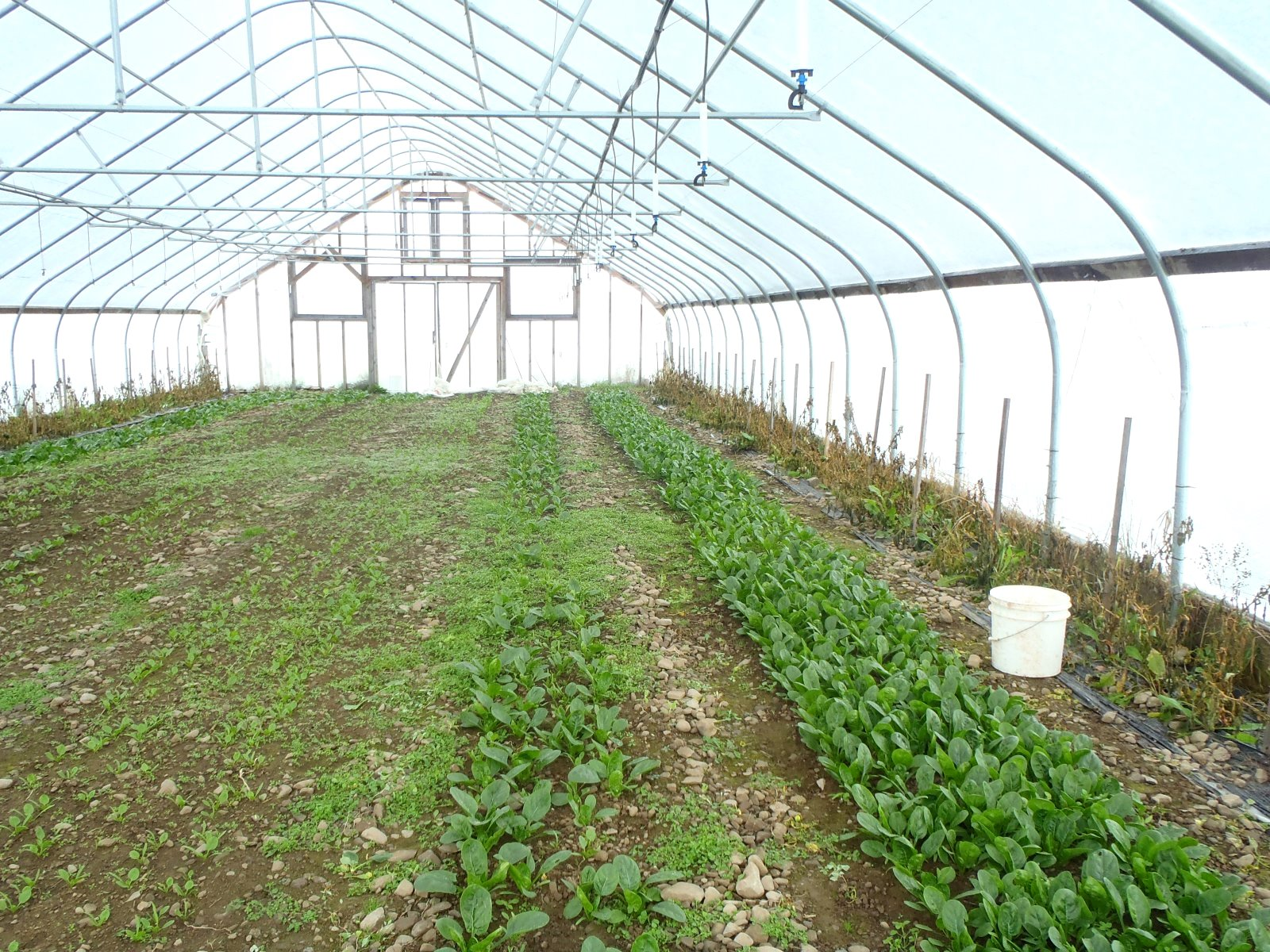 The seasonal high tunnel extends the growing season into the cooler months of the year