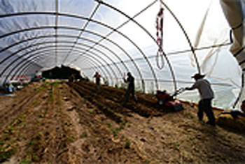 Photo of raised beds in high tunnel at El Rincon Farm