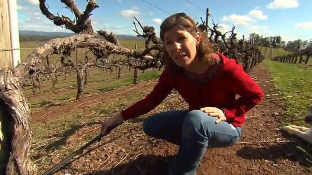 Anna Johnson grows grapes for wine in El Dorado County, Calif., where she demonstrates how a drip ir