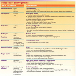 Functions of Soil Organisms