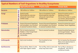Typical Numbers of Soil Organisms
