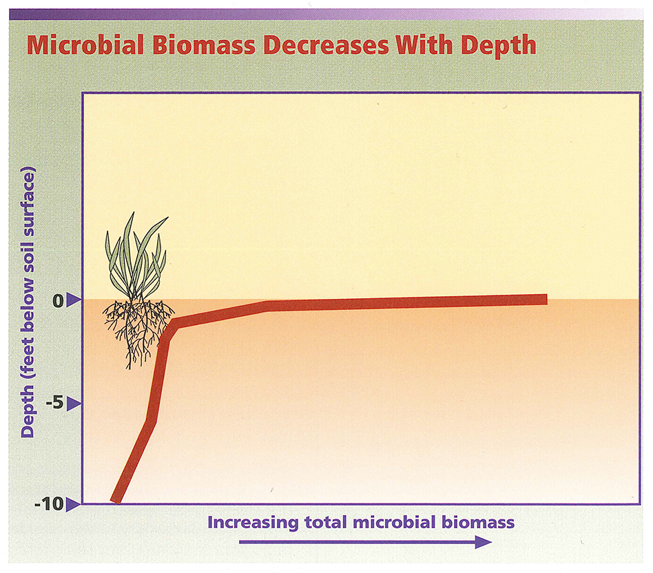 Microbial Biomass Decreases with Depth