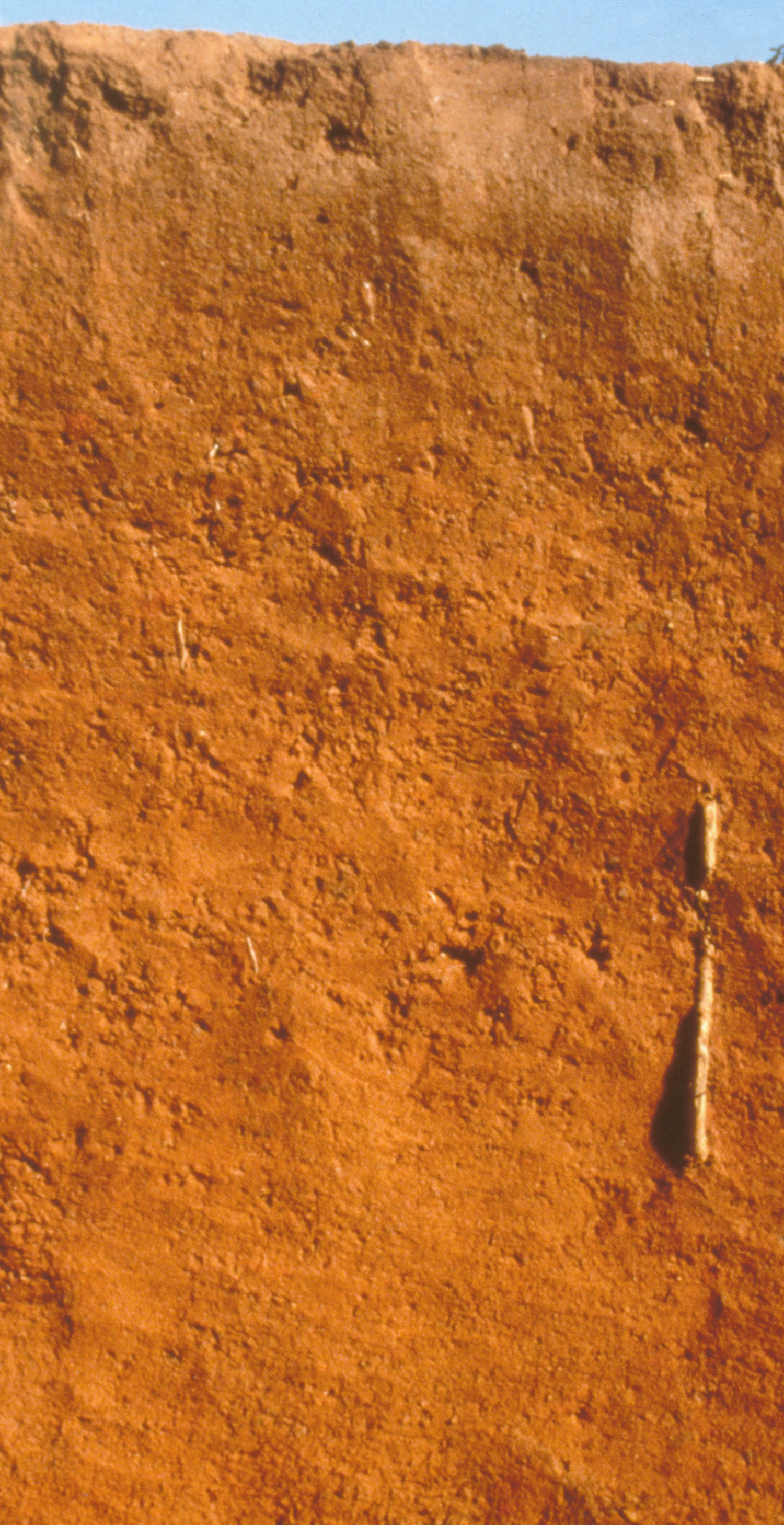 Red and yellow soil images images for Soil yellow color