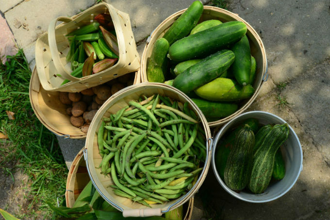 bushel of cucumbers, green beans and zucchini