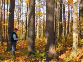 An NRCS representative inventories trees in a forested area