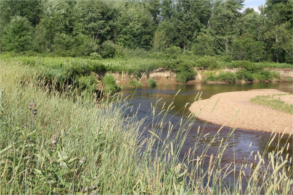 Riparian Buffer planting in New Hampshire