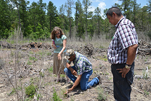 USDA and Tribal staff inspect the progress of longleaf pine seedlings planted in 2013.