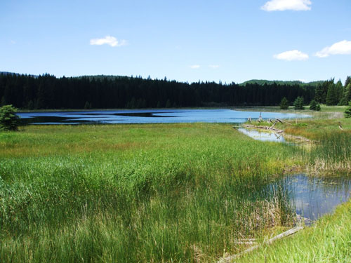 After restoration, Dudley Slough pond increased in size by 50 percent.