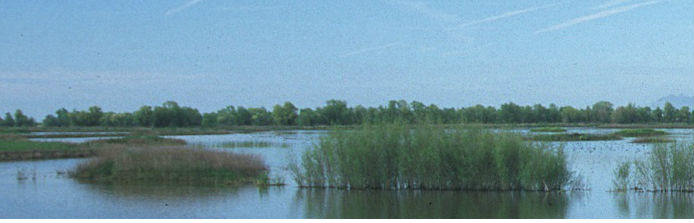 wetland enrolled in WRP