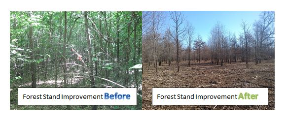 Forest Stand Improvement Before and After
