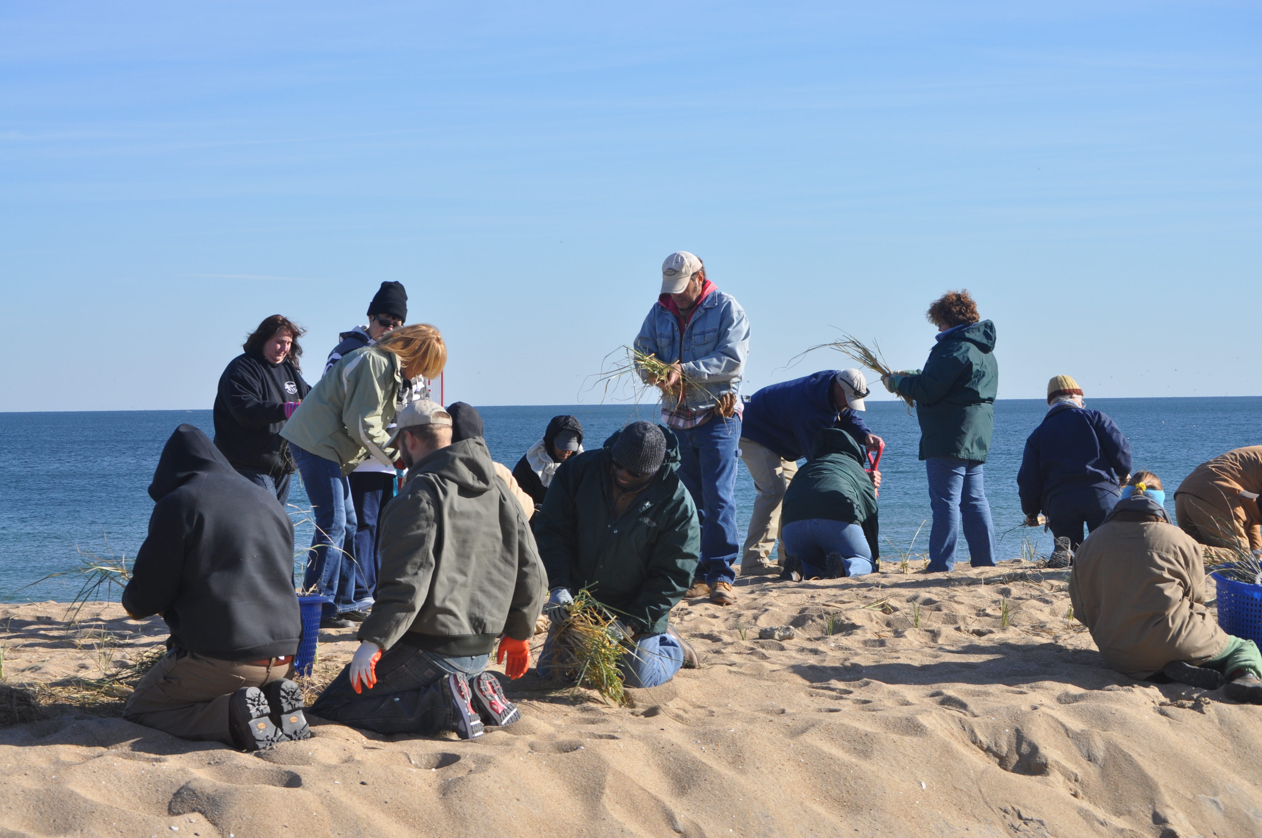 NRCS and Earth Team volunteers planting beach grass