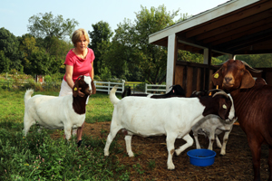 Nancy Faulkner tends goats