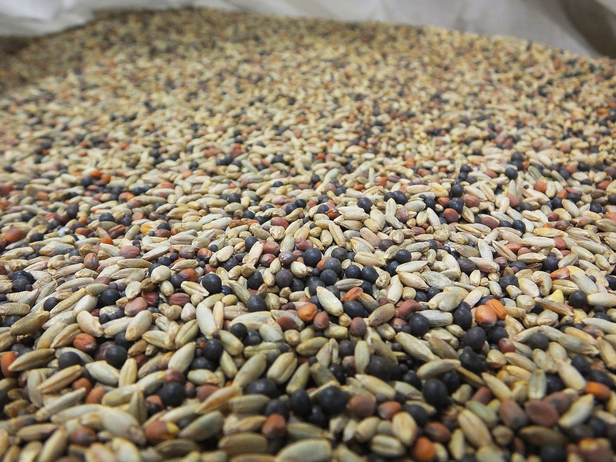 "In addition to planting rotations, soil health farmers often use a ""cocktail mix� of cover crop seed"