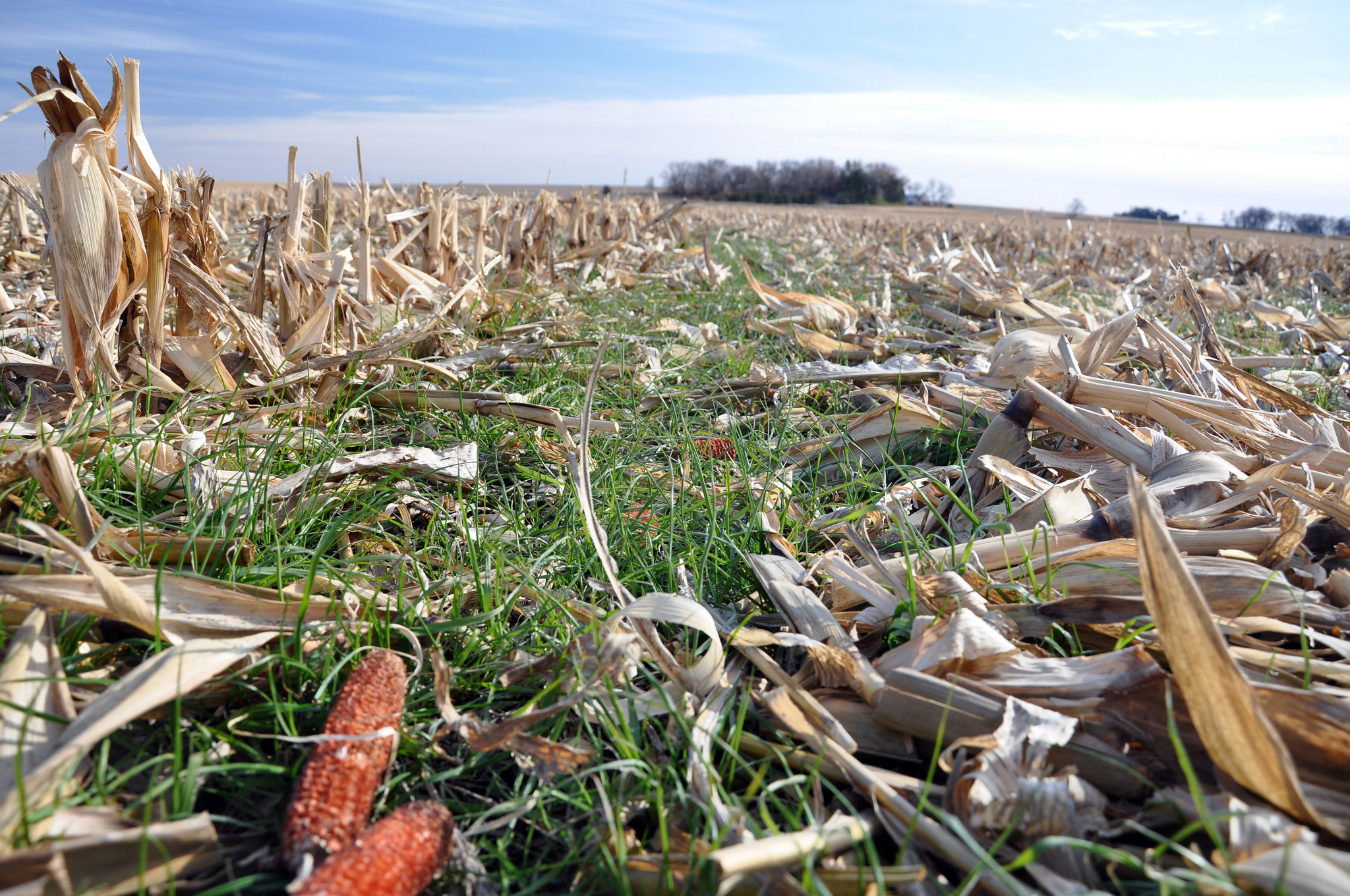 "Living cover crops and plant residues help provide ""armor� to the soil, protecting it from variation"