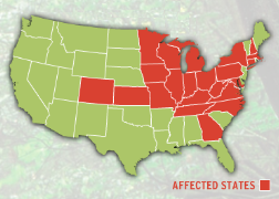 States where the Emerald ash borer has been detected
