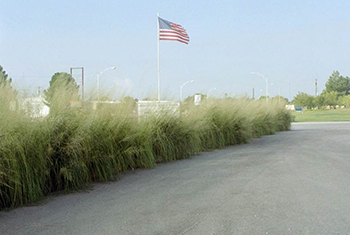 2009 Noise barrier and windstrip planting at Lovington Agrcultural Service Center Lovington, NM next to Local Highway