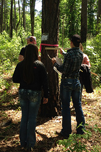 During the woodland clinic, students are tested on tree measurement and volume.