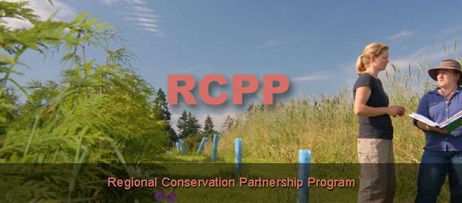 2014 rcpp page banner
