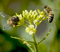 Bees are one of many pollinators losing habitat in Florida