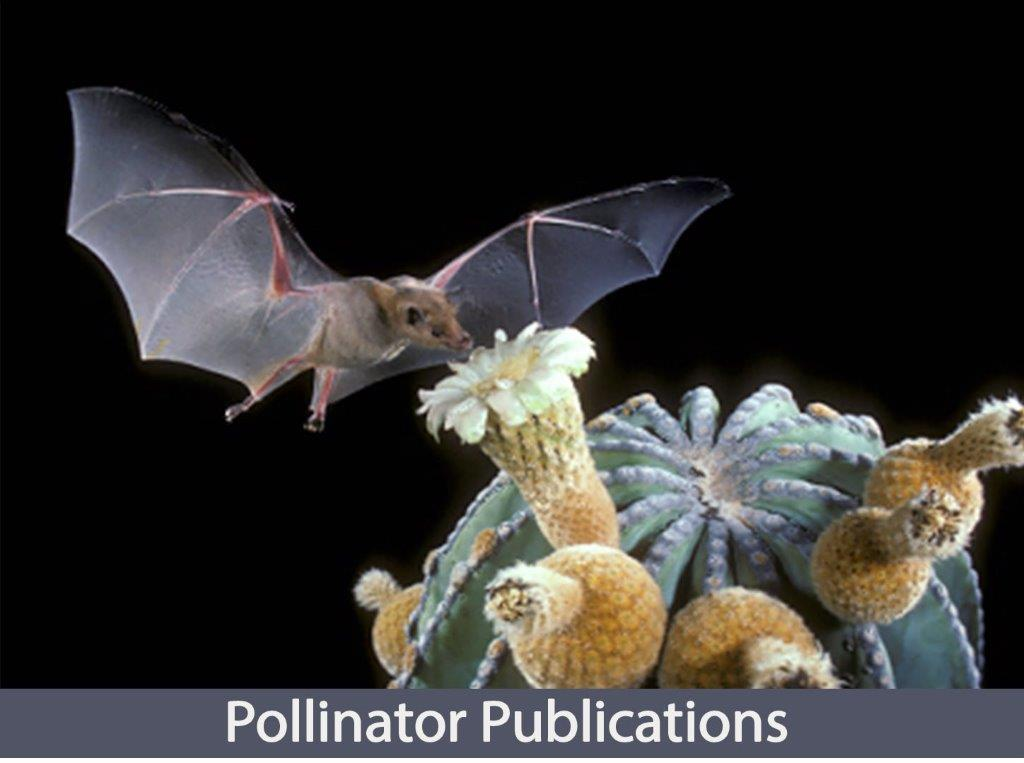 Bat image for the Pollinator