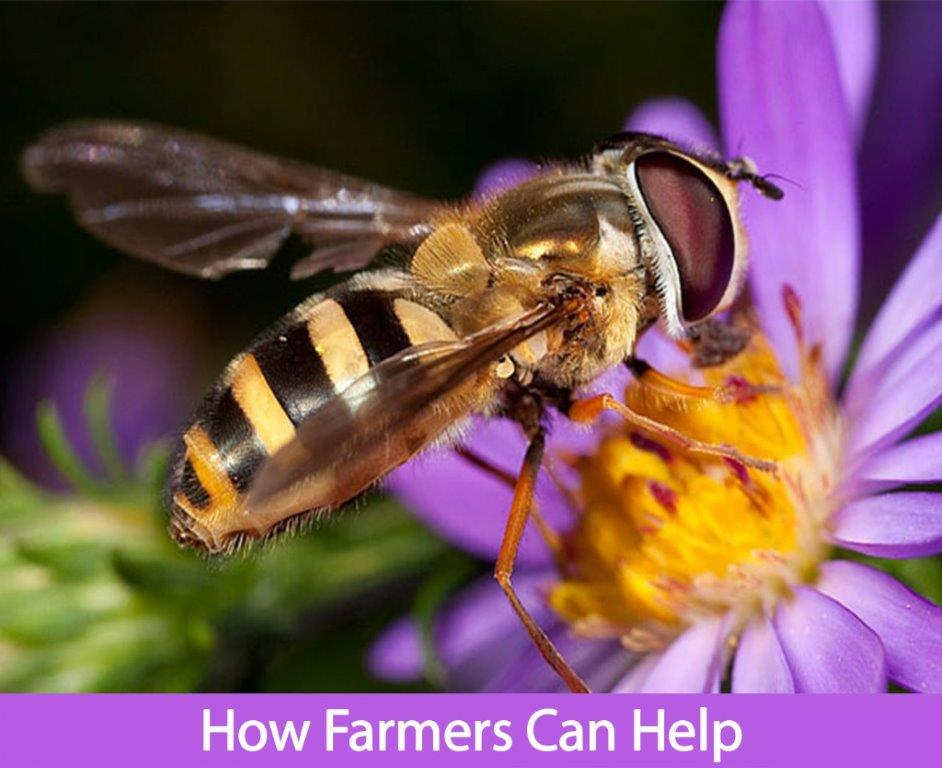 Bee image for the Pollinator