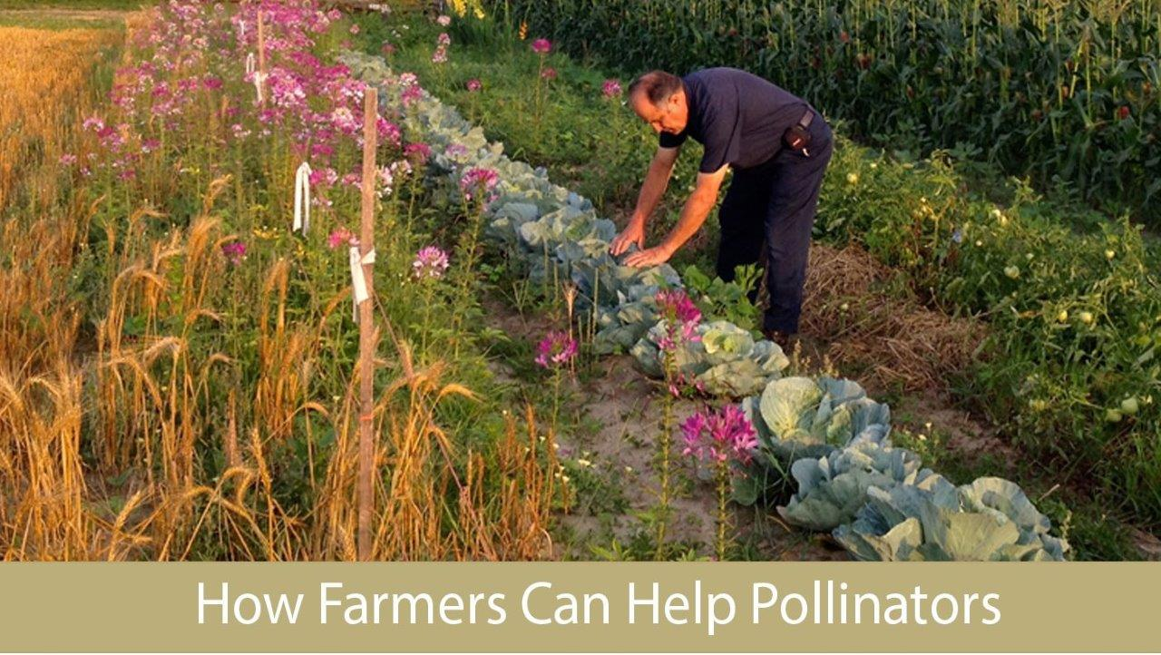 How farmers help pollnators