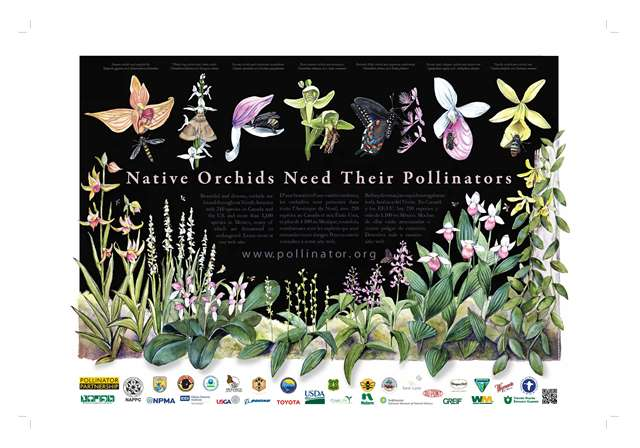 Native Orchids Pollinator Poster