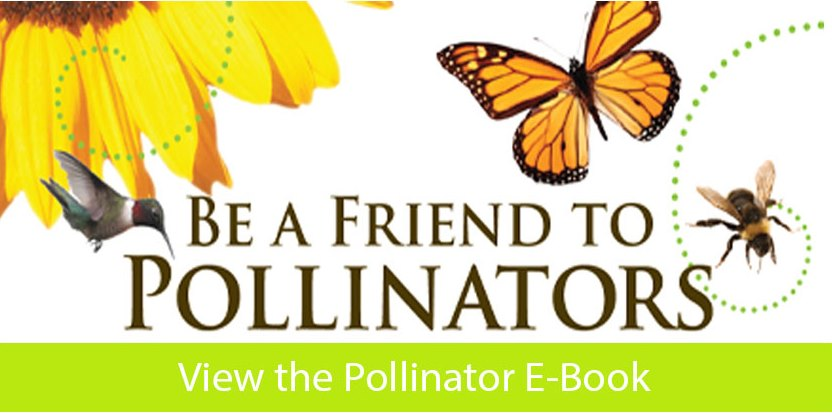 View the Pollintor E-Book Revised
