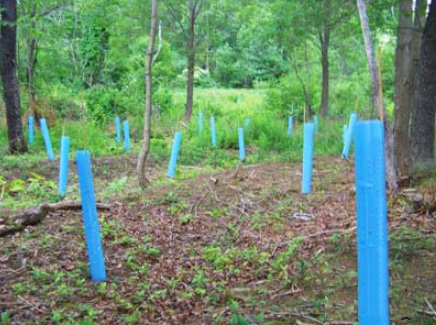 Trees protected in a riparian buffer