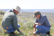 Bedortha and Mundy crouch amidst a healthy sagebrush-steppe habitat