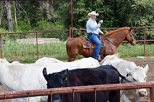 Ron Gill, Extension livestock specialist, gives a low stress cattle handling demonstration.