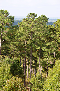 Scenic view from the highest point on Winston 8 Ranch in Nacogdoches.