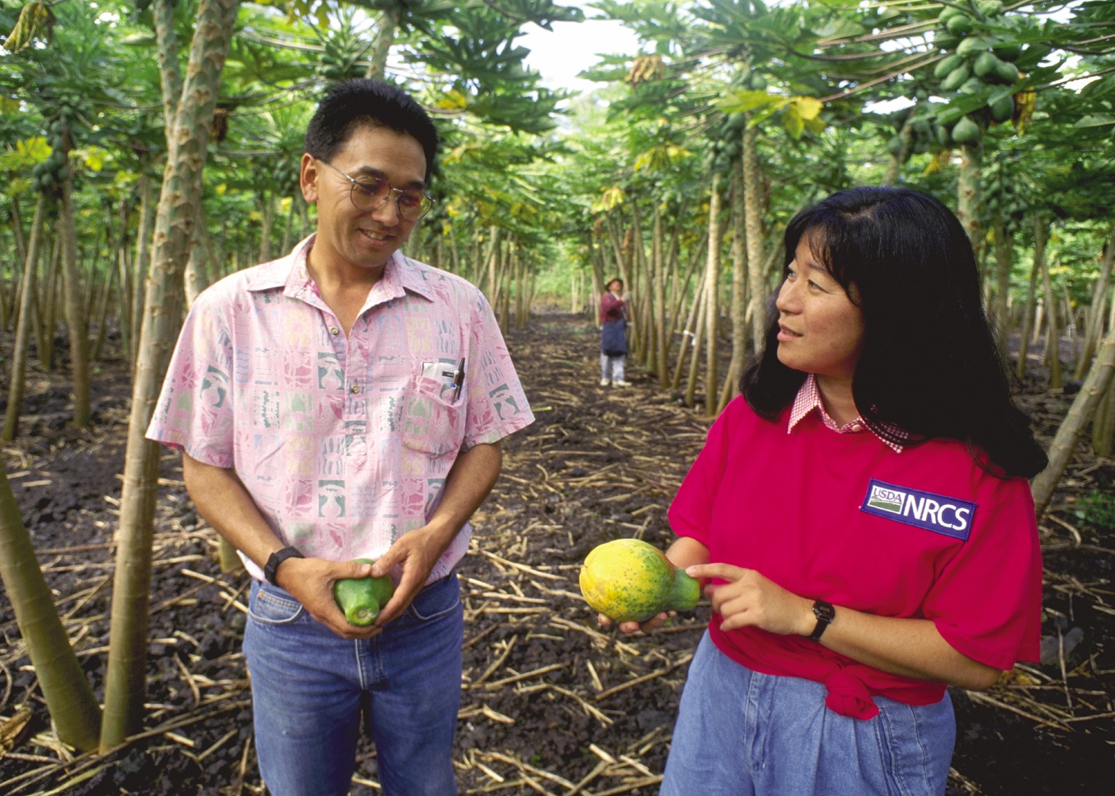 Plant Supervisor for Tropical Hawaiian Products and NRCS Conservationist discuss conservation on a papaya orchard in the Waiakea Conservation District in HI.