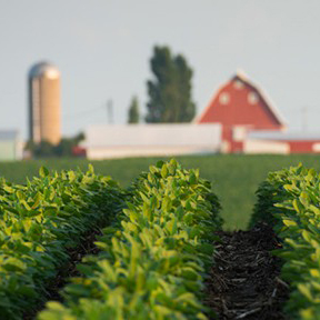 Soybeans in foreground of farming headquarters