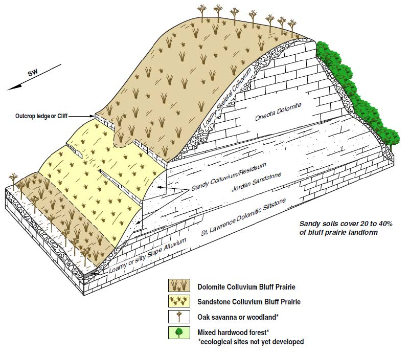 Cross Section Illustration of Dolomite Colluvium Bluff Prairie