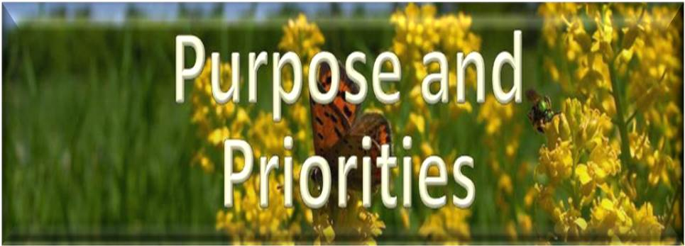 CSP Purpose and Priorities