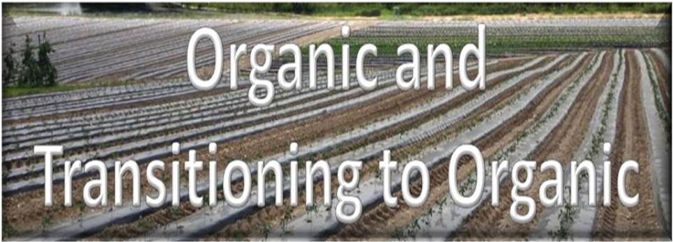 Organic and Transitioning Heading