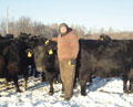 ��Pete Berscheit stands next to one of his cows bale grazing on pasture during 20 below zero weather.