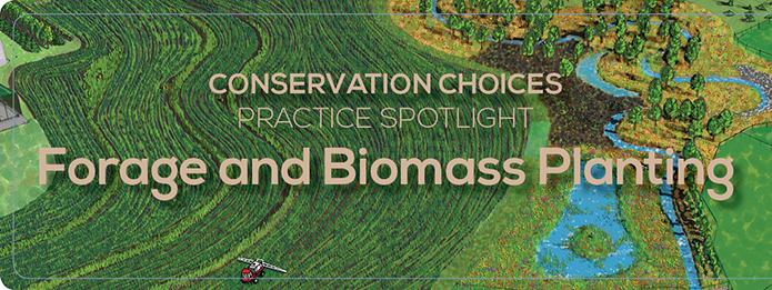 Forage and Biomass Planting