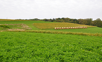 Alfalfa field as part of a crop rotation in Dallas County, Iowa.