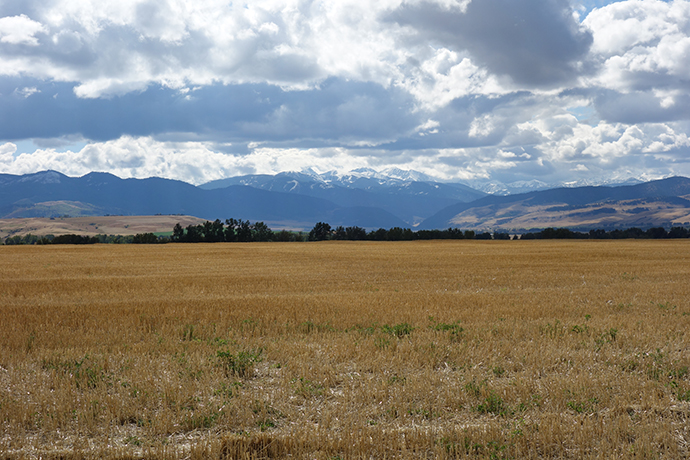 Looking out over a field at the Oliver conservation easement to see the mountains in the background.