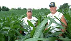 Anthony, left, and Tom Westhues in one of their fields of no-till corn in summer 2008.