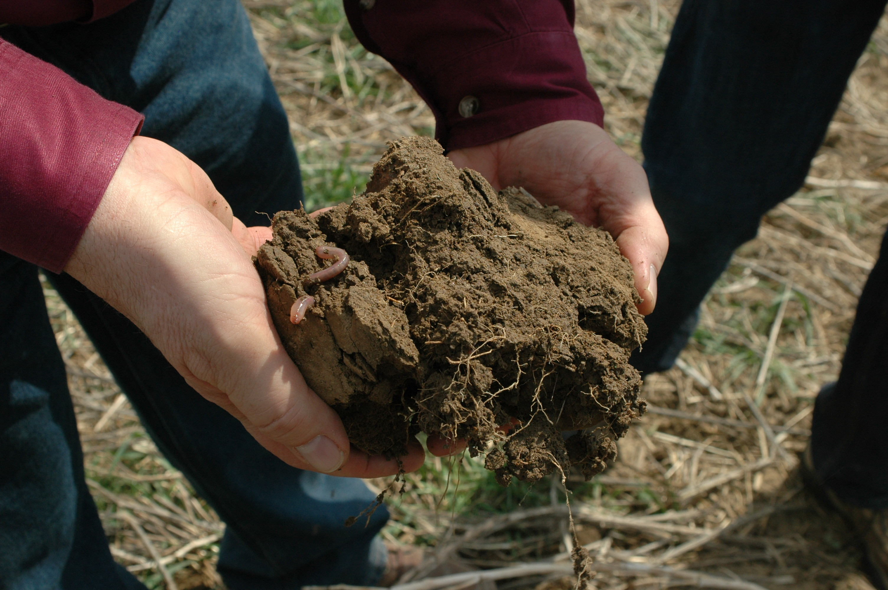 Healthy soil with earth worms